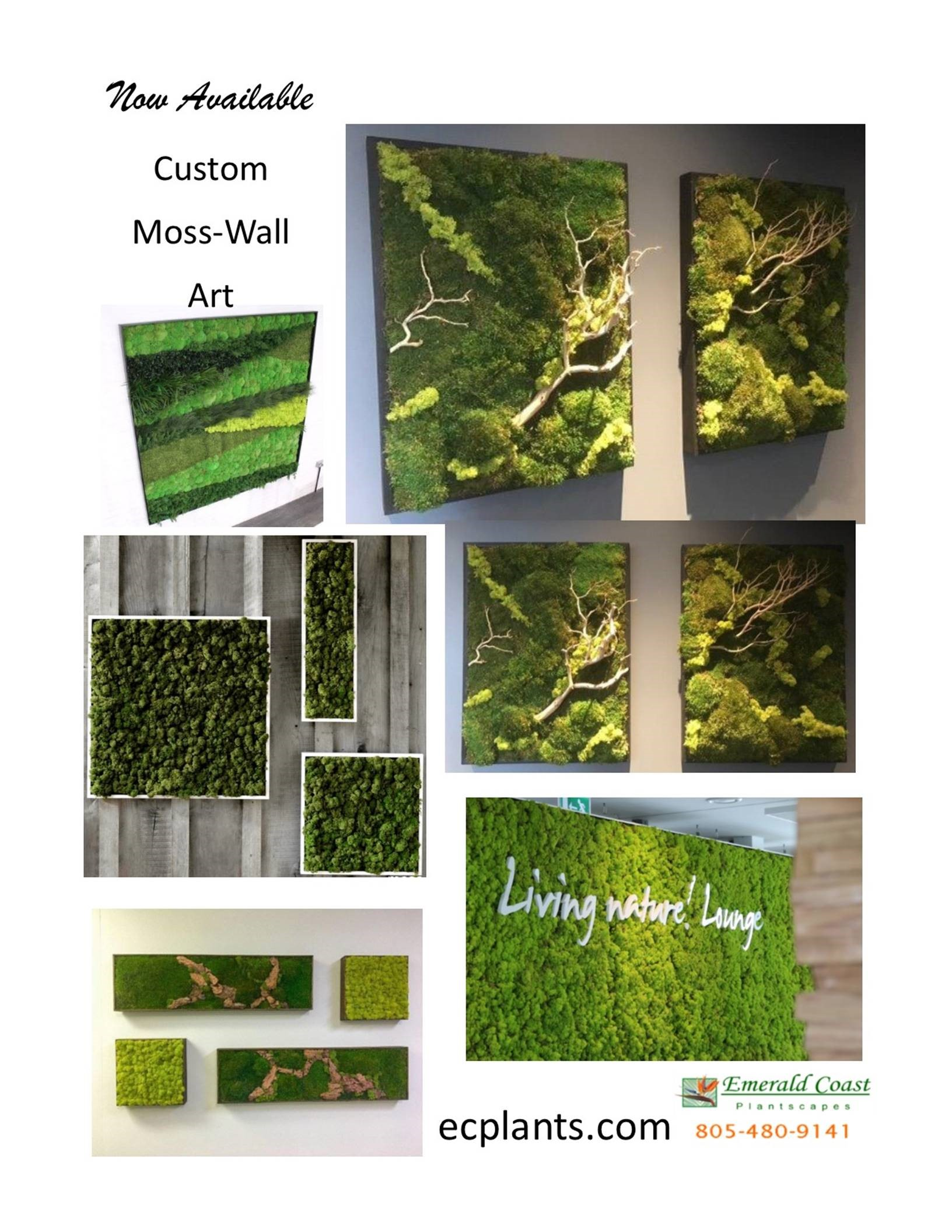 Emerald Coast Plantscapes Now Offers Custom Wall Art Made With Real Moss  Preserved.
